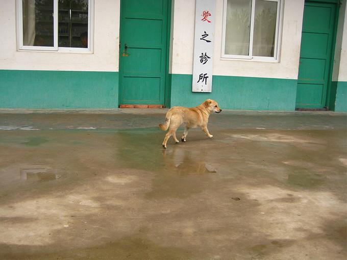 愛犬家が猛抗議 中国で夏至の日に「犬肉祭り」・・・