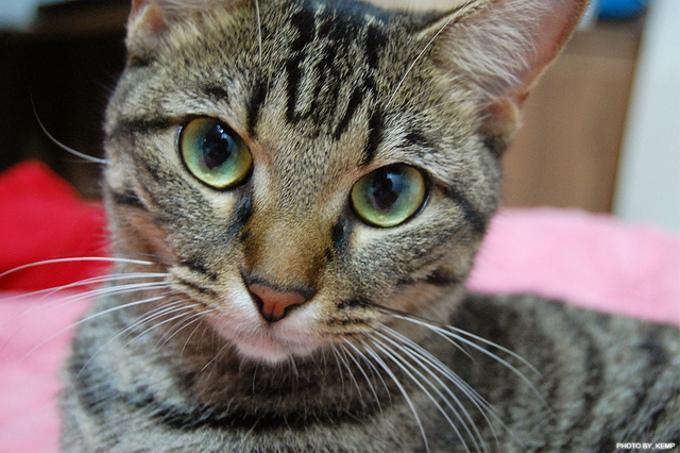 日本で一番人気がある猫の名前(2014)