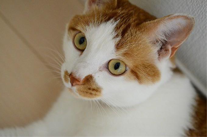 「あと30分遅れていたら死んでいた」一命を取り留めた猫が2年後にとんでもない「美ネコ」に!