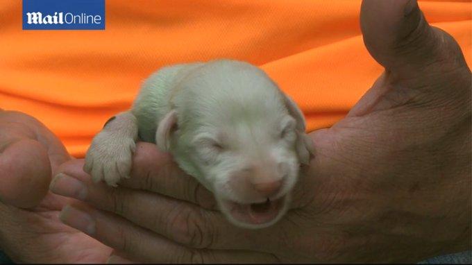 スペインで緑色の犬が生まれた?
