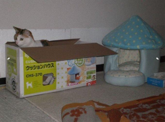 「そっちじゃなかったんだけどなー」 猫の為にクッションハウスを買った結果・・・