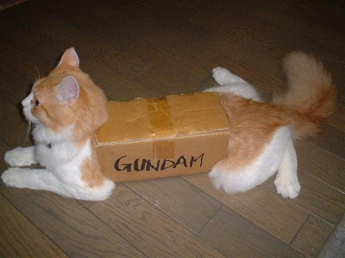 猫にティッシュ箱を渡した結果・・・