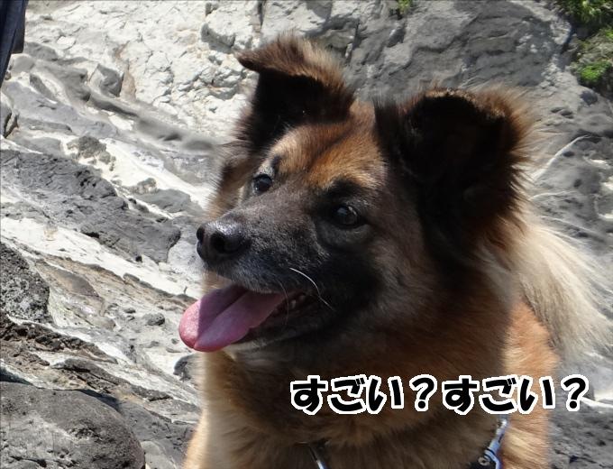 犬は人間が聞き取れない超音波も聞き取れ、可聴域は人間の倍以上!
