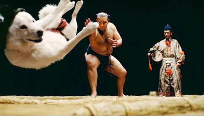お父さん犬が今度は相撲にチャレンジ?琴欧州に投げ飛ばされる!