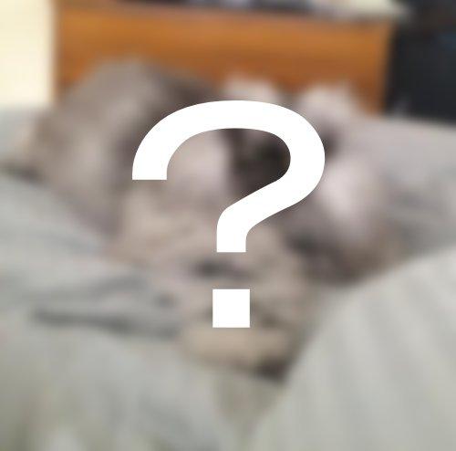 どう見ても怒っているようにしか見えない猫(写真6枚)