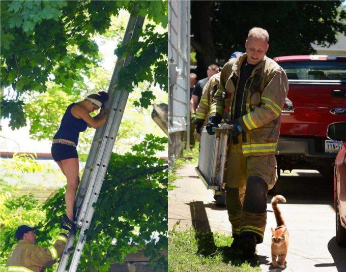 木から下りられなくなった猫を助けようとしたところ・・・(アメリカ)