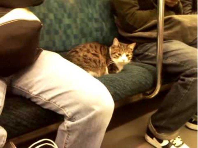 「えっ?何でここに?」 電車に乗る珍客が話題に