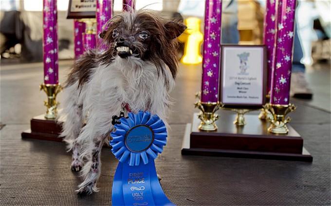 「世界で最も醜い犬コンテスト(2014)」で優勝した犬はどんな犬?