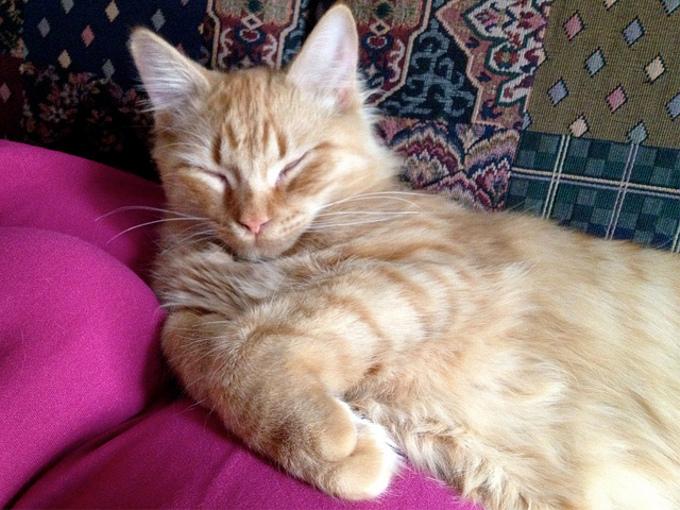 「猫が好きそうな有名人」第1位に輝いた芸能人って誰?