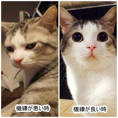 機嫌が悪いとまるで別人な猫が話題に