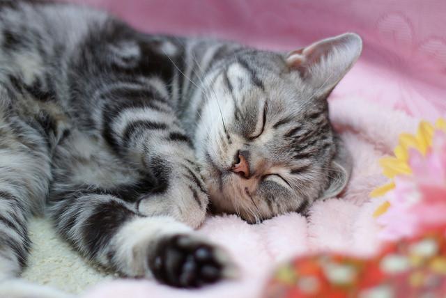 気持ちよさそうに寝る猫に癒される