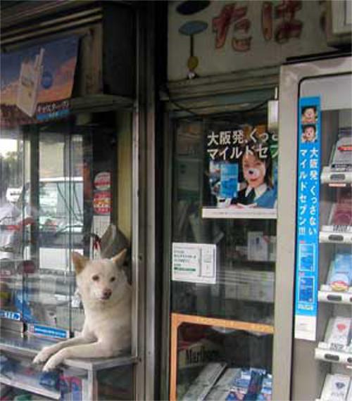犬がタバコ屋の店番を始めました