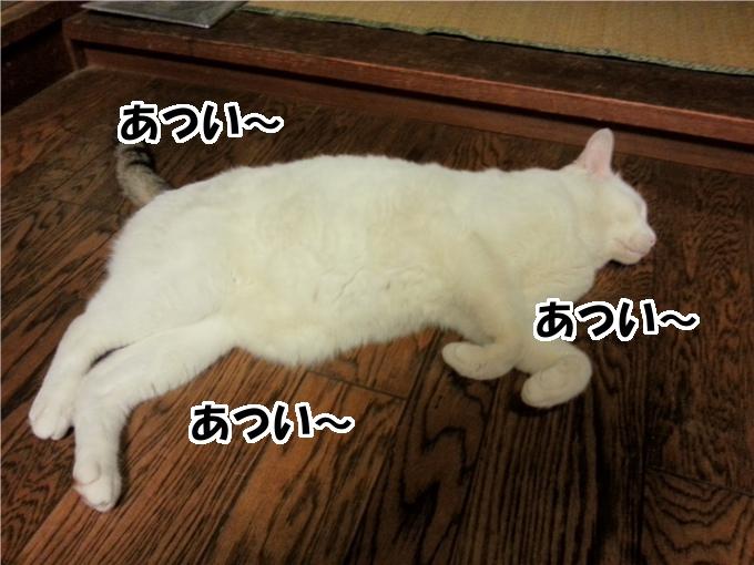 【犬猫日記】あつい~、あつい~