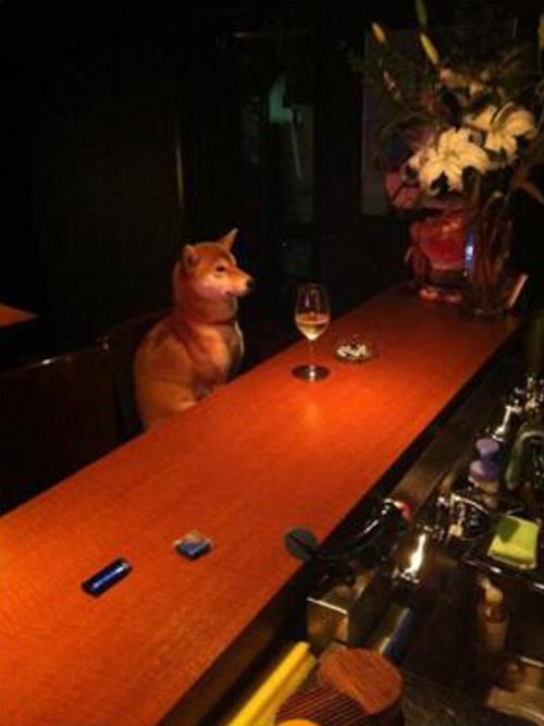 「マスター、いつもの」 バーにいた意外なお客さん