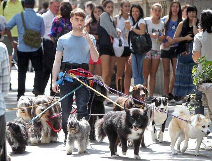 ハリーポッターのダニエル・ラドクリフが10匹以上の犬と散歩していると話題に
