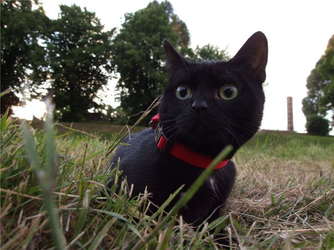 黒猫は幸運の象徴だった!?
