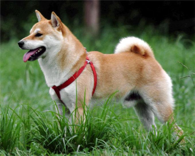 日本犬は全部で6犬種。その犬種とは?