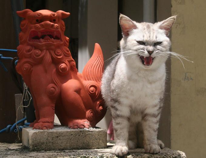 狛犬(こまいぬ)よりも迫力満点な猫