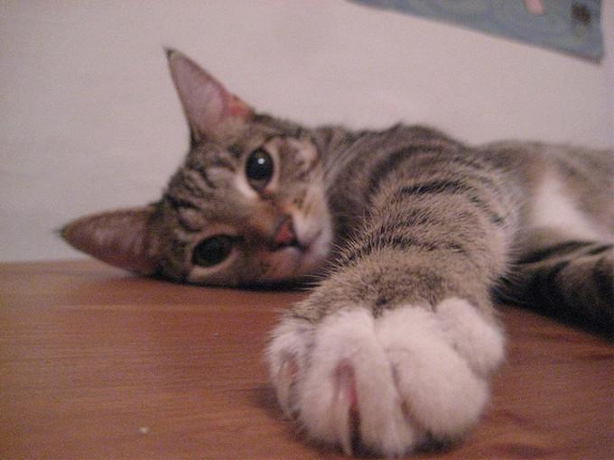 猫の利き手を調べようとした結果・・・