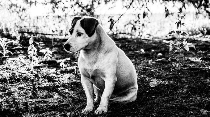 2013年度の犬猫殺処分が過去最少に(茨城)