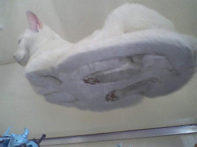 猫を下から見るとこうなっていた
