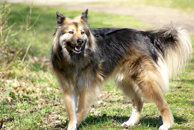 犬の腸の長さってどれくらい?