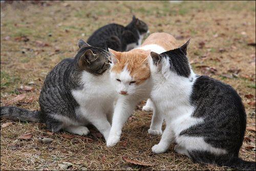 まさかそこを通るとは・・・あまりにもマイペースな猫