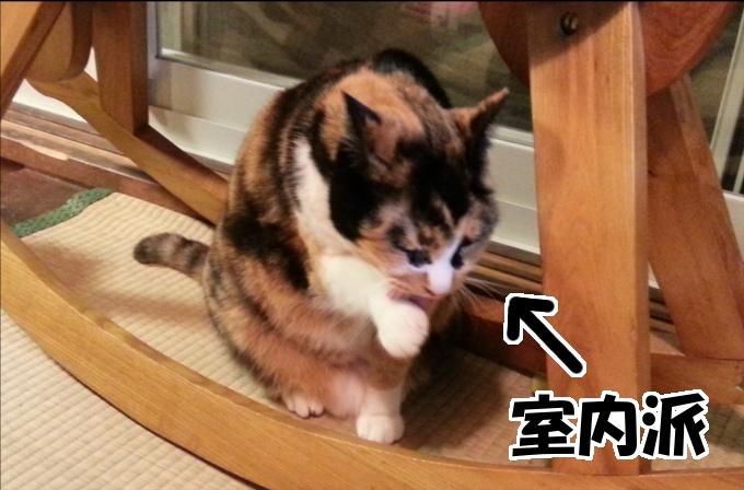 外で生活する猫よりも室内で生活する猫のほうが長生きする