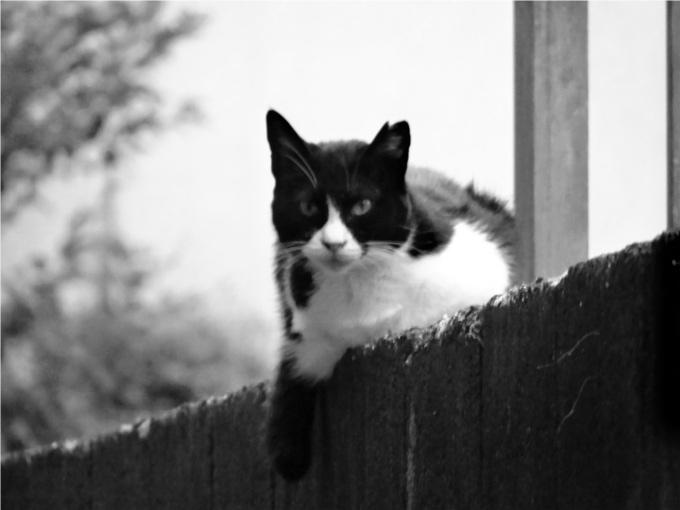 人間では160歳!?世界で最も長く生きた猫