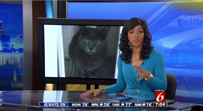 飼い主が猫に監禁されたとニュースに(アメリカ)