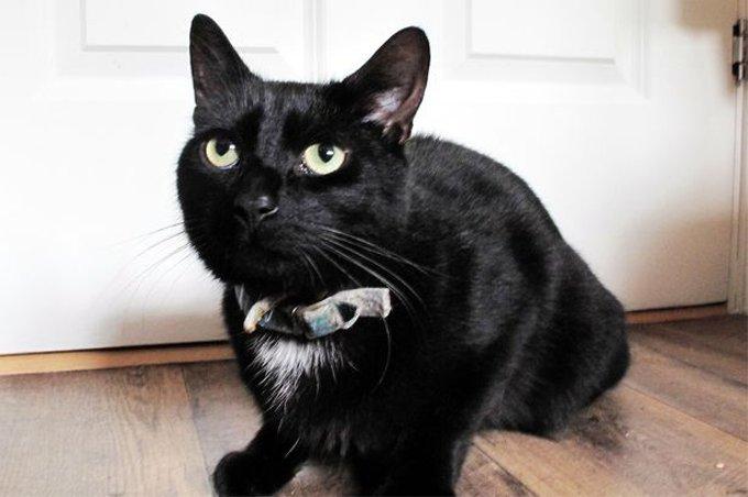 猫が隣人に助けを求める!倒れた飼い主九死に一生(イギリス)