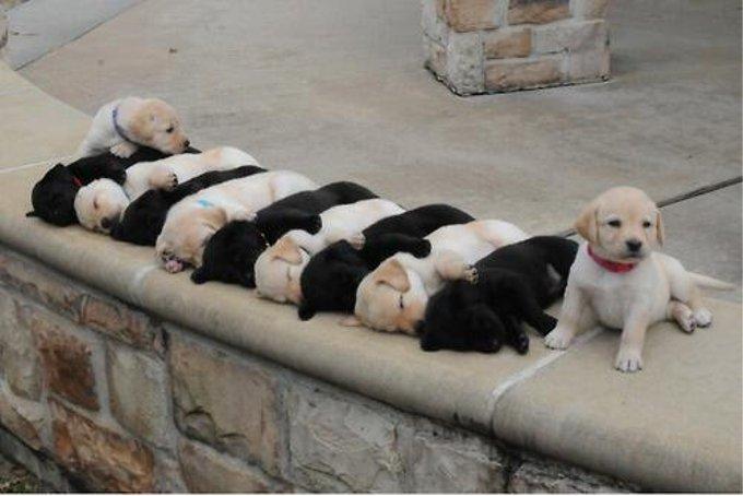 ミルフィーユ状態で昼寝をしている子犬が話題に