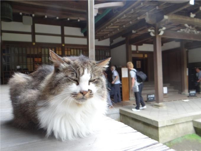 円覚寺でのんびり暮らす2匹の猫(鎌倉)_かなちゃん