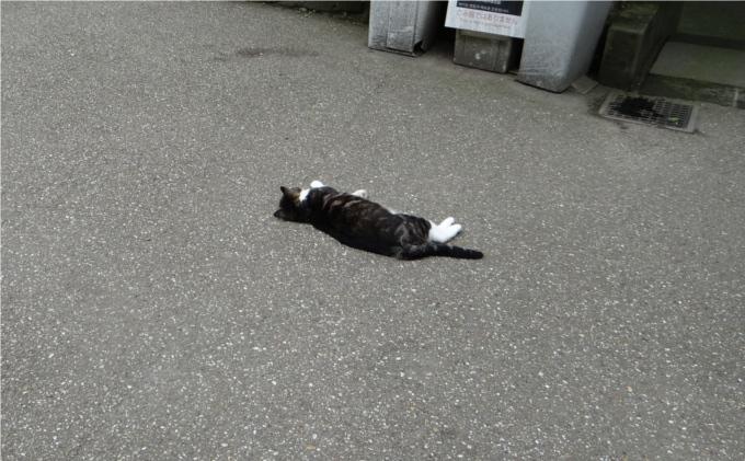 円覚寺でのんびり暮らす2匹の猫(鎌倉)_しいちゃん