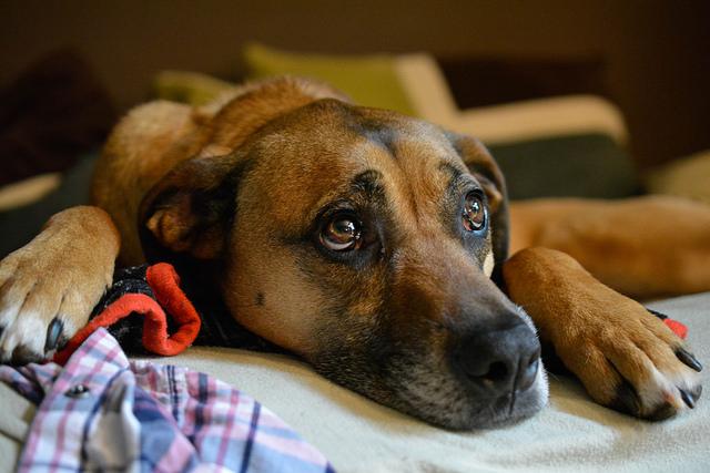 動物愛護センターで1週間に保護された犬の数が3倍になった理由(熊本)