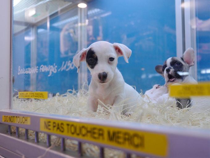 スペインでペットショップでの犬猫販売が禁止になる!?