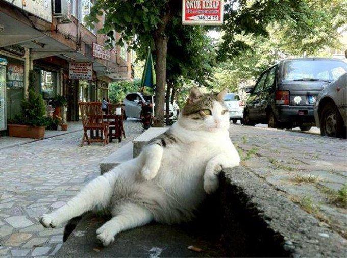 どこまでも強気!街中でくつろぐ貫禄たっぷりな猫
