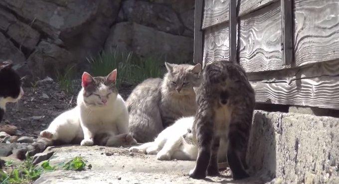 愛媛にある猫島が話題に