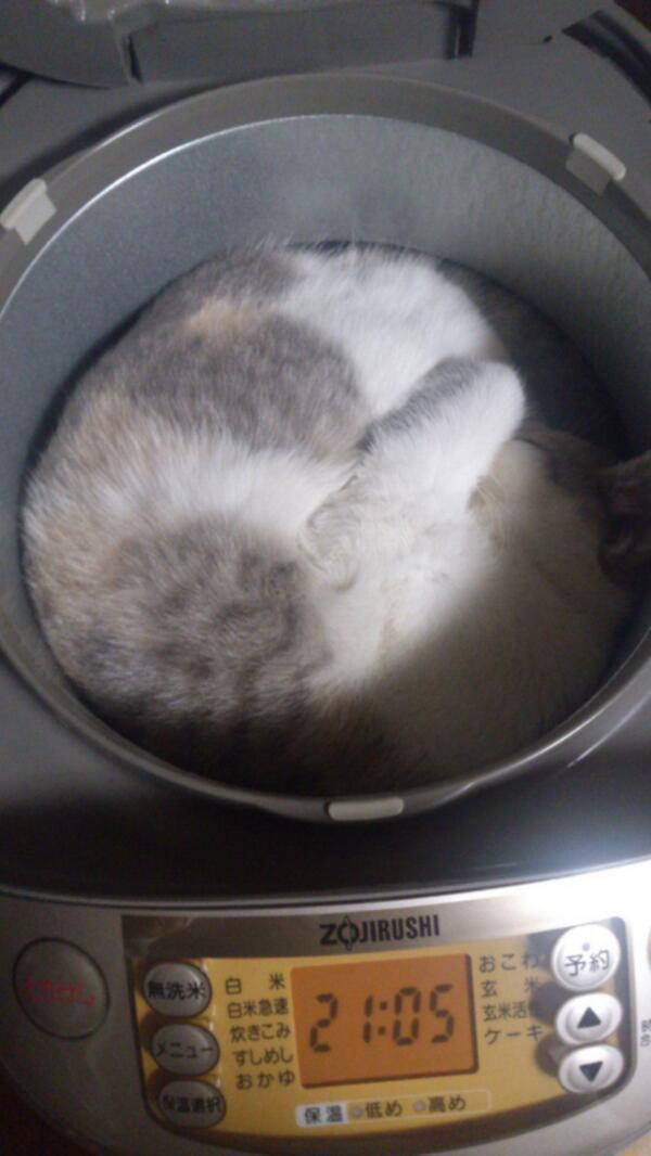 猫が部屋のどこにもいないと思ったら・・・Twitterで話題になった写真