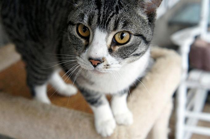 猫を飼うのに1ヶ月にかかるお金はいくら?