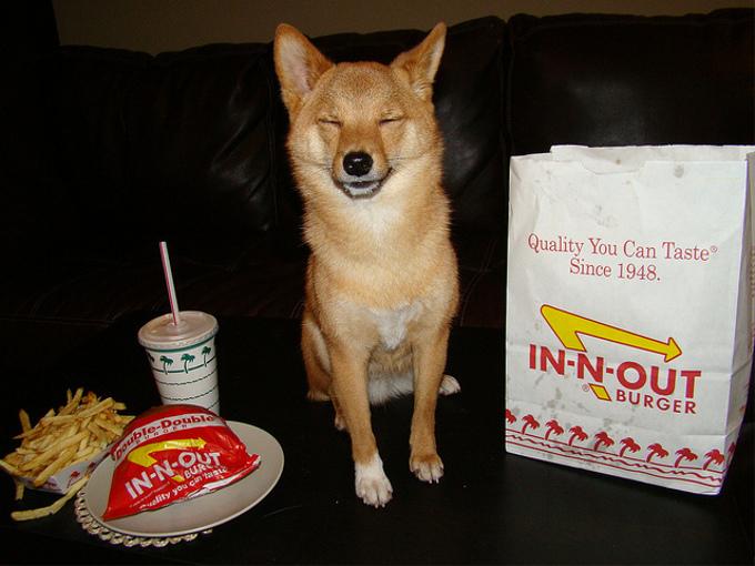 成犬用とシニア用のドッグフードって何が違うの?