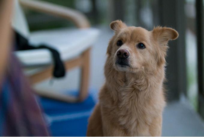 飼い主への「犬税」導入を断念(大阪)