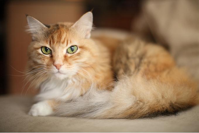 「月曜日」「ランジェロ」「たま」、飼い主さんが猫につけた名前の由来