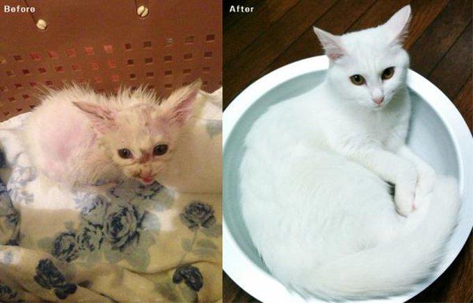 ネズミ捕りの罠にかかってボロボロだった猫がとんでもない美ネコに!
