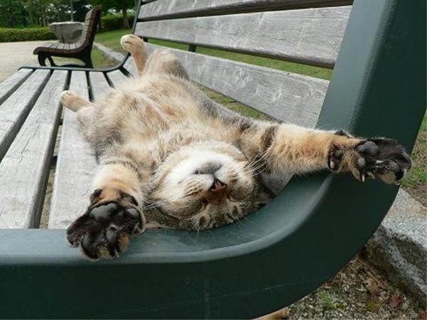 公園のベンチで「これでもか」というほどくつろぐ猫