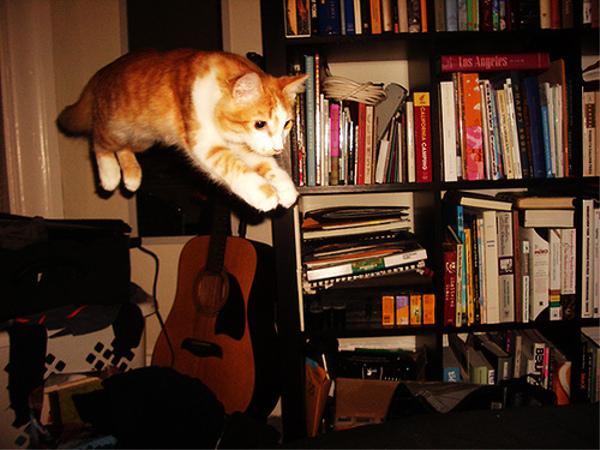 〇〇メートルの高さからコンクリートに落ちて無事だった猫がいる!?