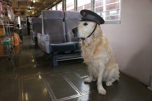 ゴールデンレトリバーの「雪之丞」が駅長に任命?国鉄越美南線の全線開通80周年