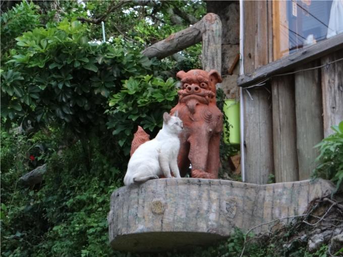シーサーと猫のツーショット(沖縄)