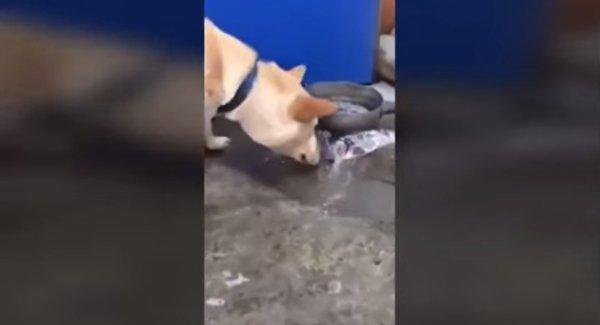 必死に魚を助けようとする犬が話題に