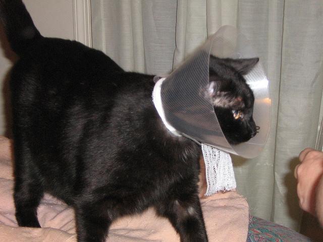 猫がケガをした時などに首に巻くものの名前